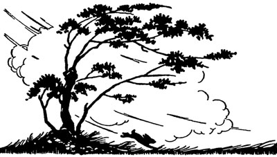 Silhouette of the Wind Blowing Trees and a Rabbit - Silhouette Art