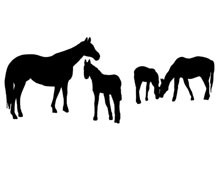 Horse Grazing Silhouette