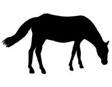 Horse Grazing Clip Art
