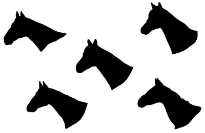 Pictures of Horses Heads